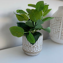 Evergreen Leaves in grey cement pot