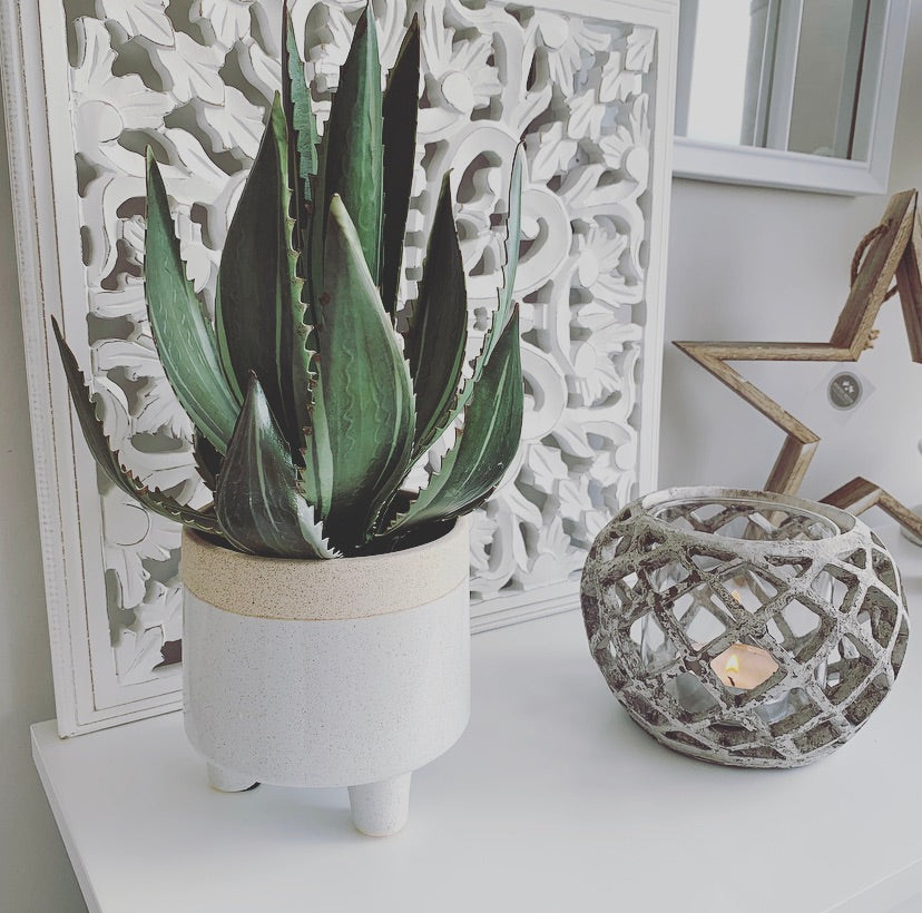 Aloe Vera plant in ceramic pot