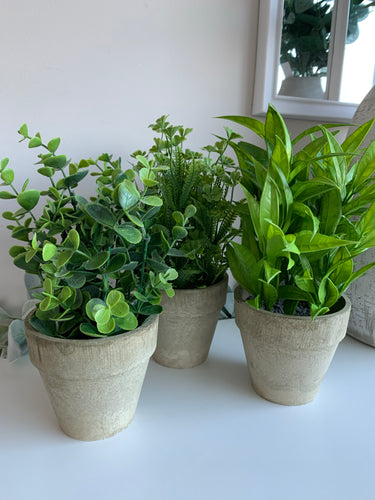 Potted Shrubs (3 designs)