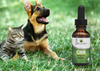 CBD-oil-for-dogs-cats-and-horses