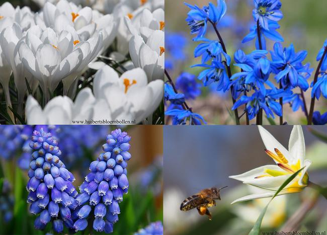 How to Create a Healthy Bee Garden