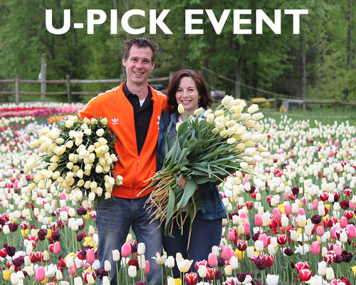 Wicked tulips flower farm email newsletter signup mightylinksfo