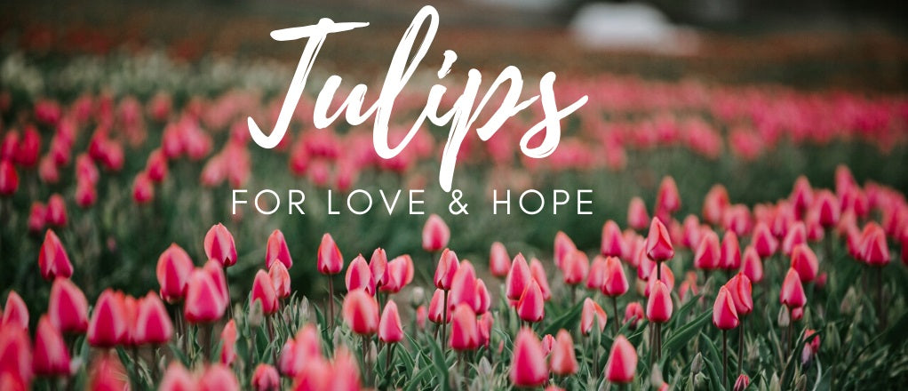 Tulips for Love & Hope