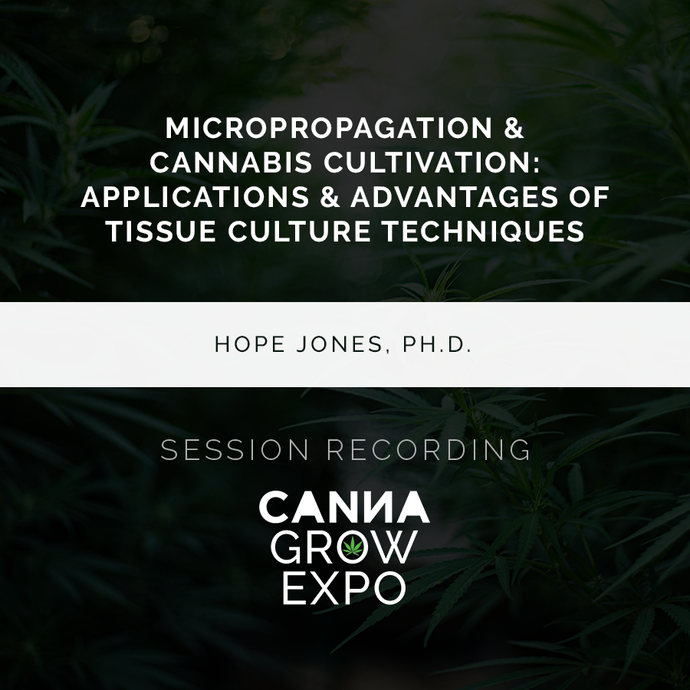 Micropropagation & Cannabis Cultivation: Applications & Advantages of Tissue Culture Techniques