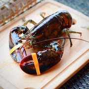 Live Boston Lobster for BBQ