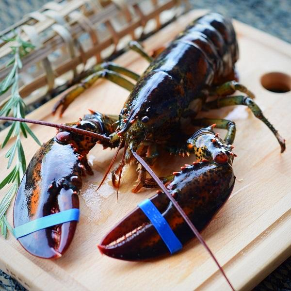Live Boston Lobster