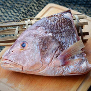Red Snapper Head