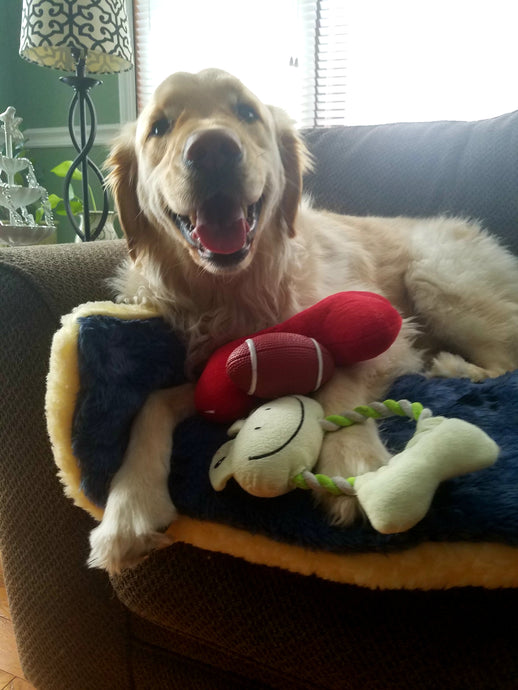 Goldens love their toys!🐶🏈⚾️😄