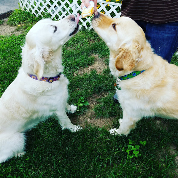 Sharing goldens