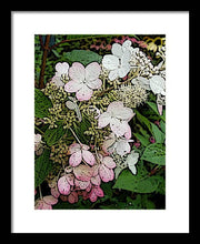 Load image into Gallery viewer, Hydrangea Flowers - Framed Print