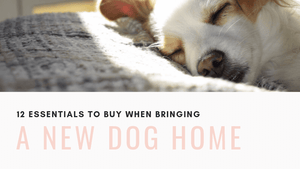 12 Essentials to Buy Before Bringing a New Dog Home