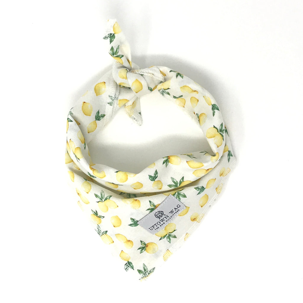 Lemon Print Dog Bandana