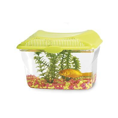 Aquarium 6L-Small Animals-Biozoo-Biozoopets