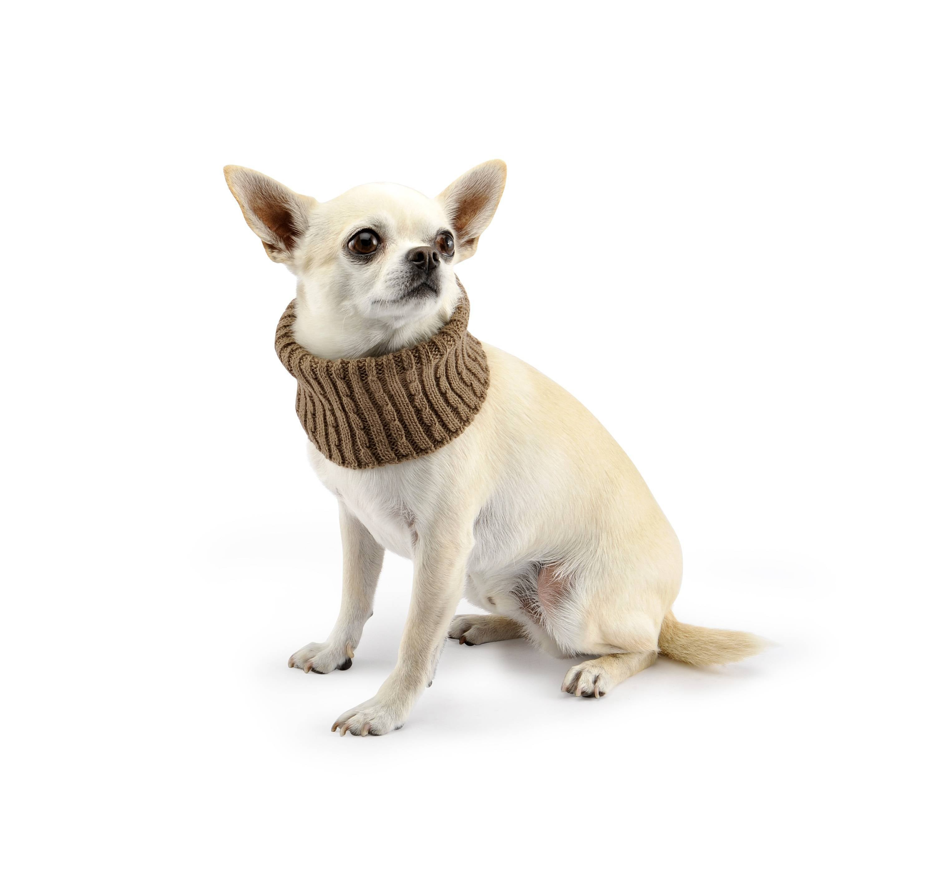 Aston Collar-Sweaters-Biozoo-Brown-8x8-Biozoopets
