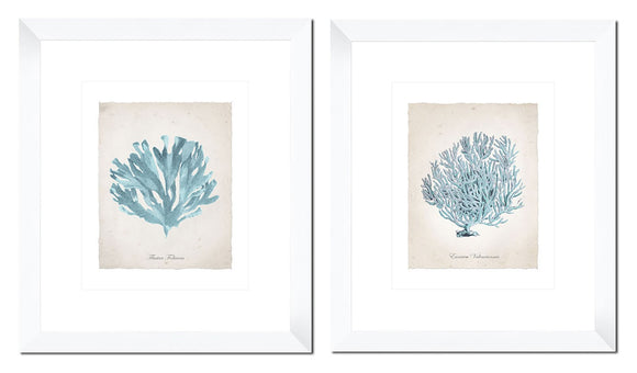 Teal Coral (set of 2) - PoppyLy