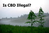 is cbd illegal