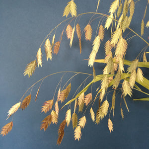 Dried Northern Sea Oats Bunch