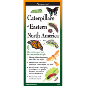 Folding Guide - Caterpillars of Eastern North America