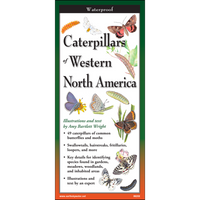 Folding Guide - Caterpillars of Western North America