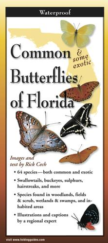 Folding Guide - Common Butterflies of Florida