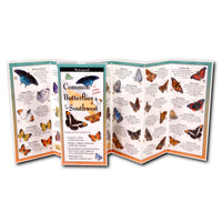 Folding Guide - Common Butterflies of the Southwest