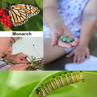 Educator's Kit - Monarch Butterfly