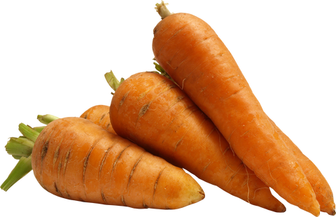 carrot paz creations