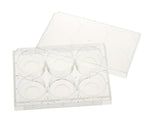CELLTREAT Plates - Multiple Well Plates, Glass Bottom (Tissue Culture Treated) - Government Lab Enterprises