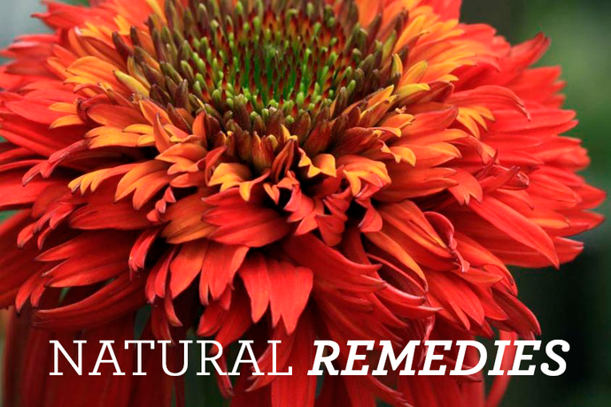 Natural Remedies to Kick that Winter Cold