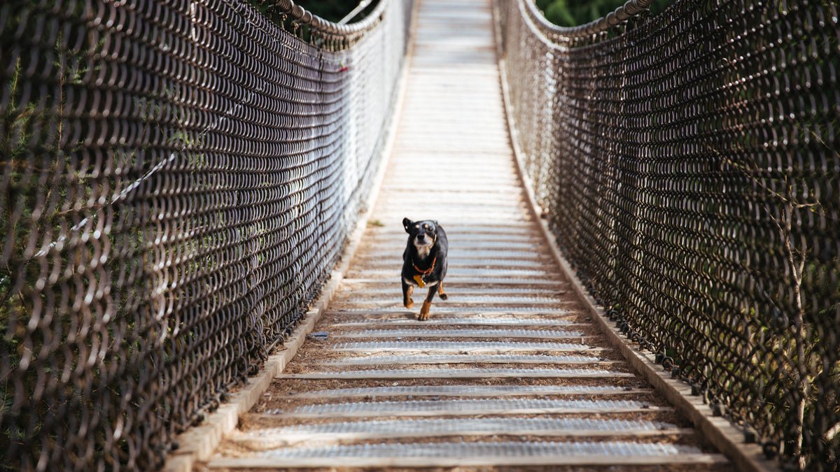 Running with Your Dog – Cowichan Valley Running