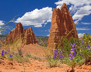 Cathedrals and Lupines, Capitol Reef Print