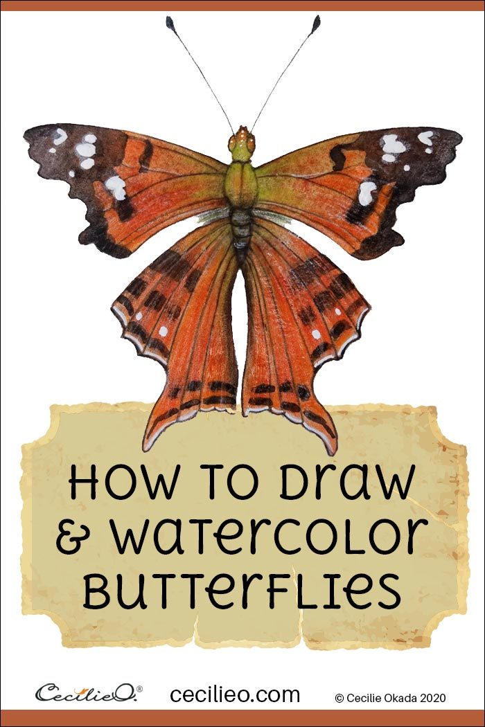 How to Draw & Watercolor Butterflies Step by Step: 4 Magnificent Butterflies.