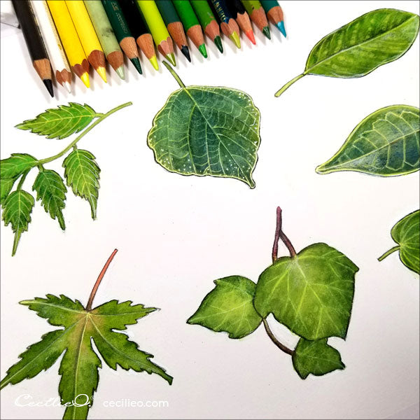 All 7 leaves with colored pencil retouch