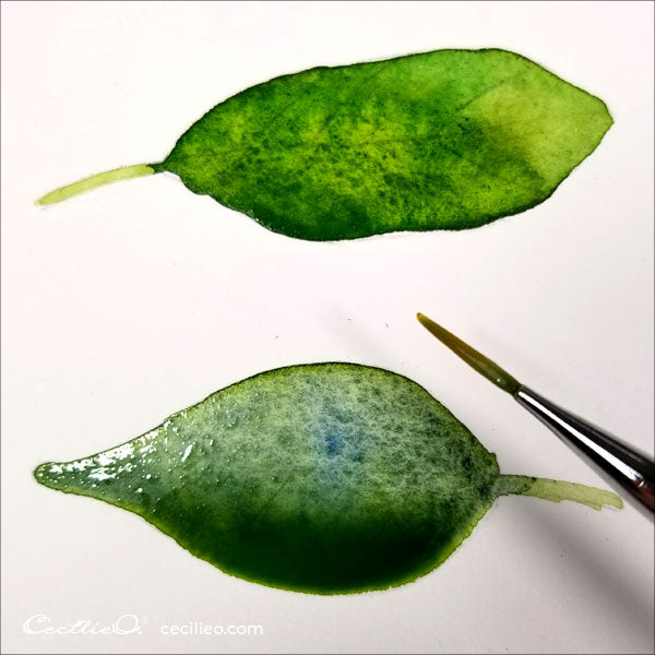 Painting two leaves with watercolor