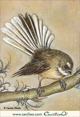 Fantail, New Zealand. By Cecilie Okada.