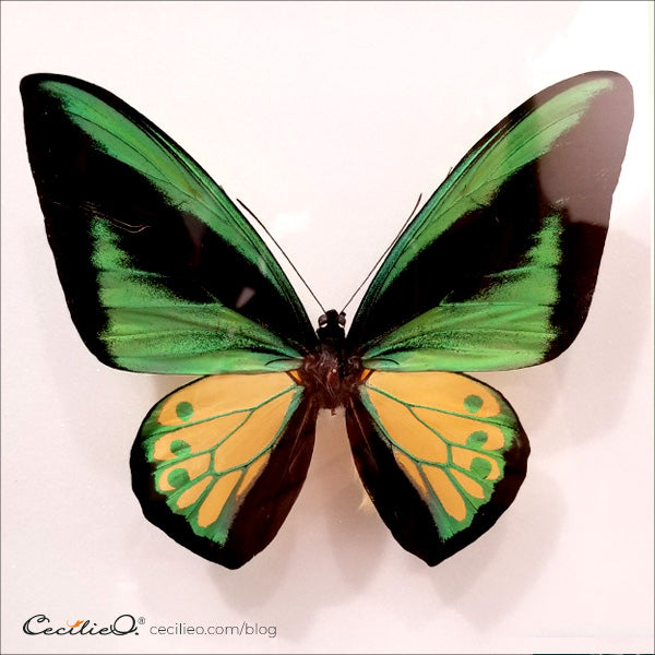 Green and pale yellow butterfly with graphic pattern