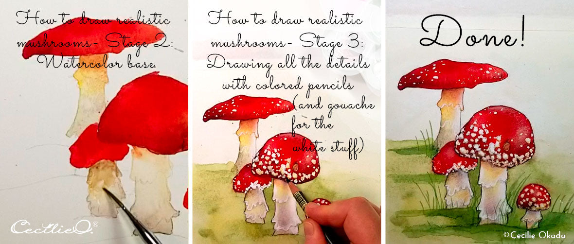 How to draw and watercolor realistic mushrooms