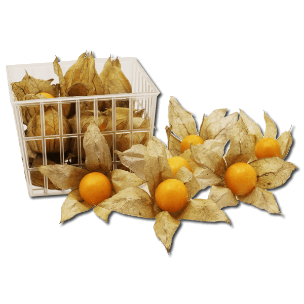 Colombian Physalis  (1 pack)