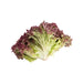 France Lollo Rosa Lettuce(150g)