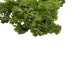 Australia Parsley(50g)