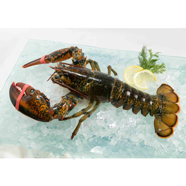 Canadian Live Lobster (L)  (1pc)