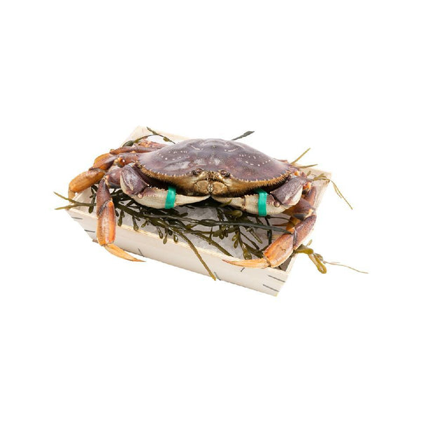 Canadian Live Dungeness Crab (L)  (1pc)