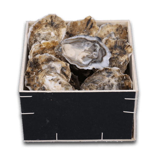 French Boudeuse Oyster Nr.4 ( 12pcs )