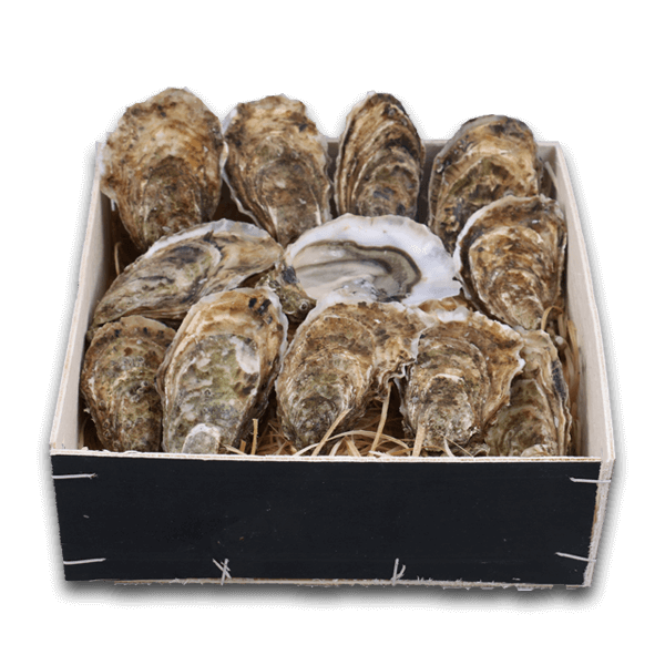 French De Ronce Oyster Nr. 3(12pcs)