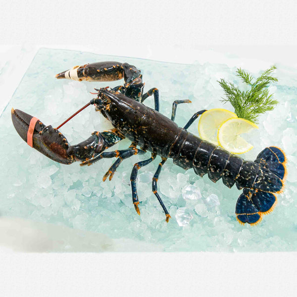 French Chilled Blue Lobster Section (1pc)