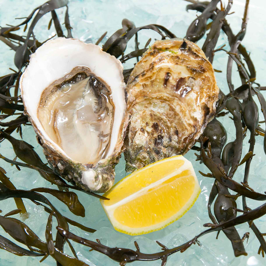 French Isigny Speciale Oyster Nr.1 (1pc)