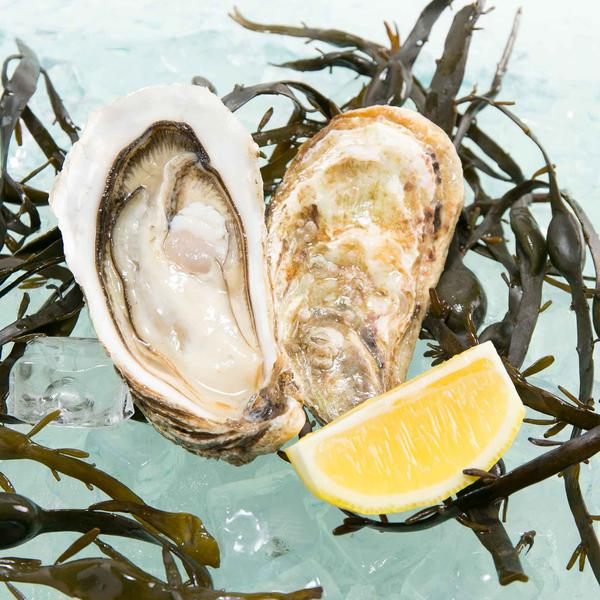 French Royale Speciale Oyster Nr.1  (1pc)