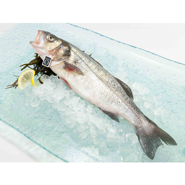 Italian Farmed Seabass - Whole (390g - 430g)