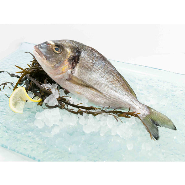 Italian Farmed Seabream - Whole (300g - 340g)