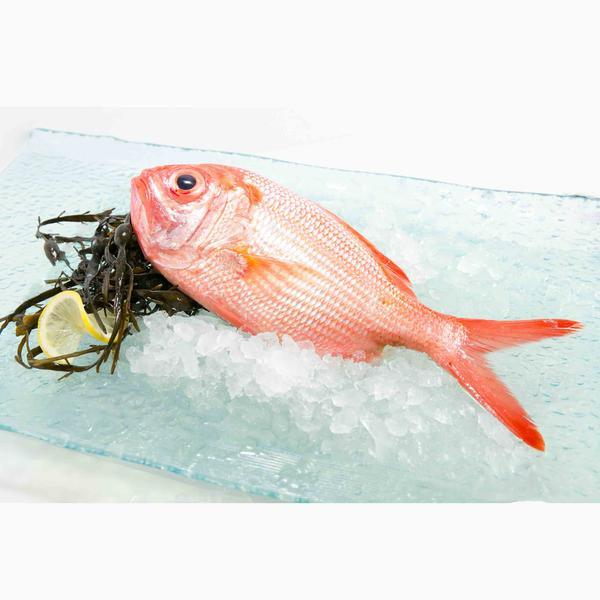 New Zealand Chilled Red Snapper Fish  (300g)